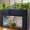 Self Sustaining Aquarium Garden